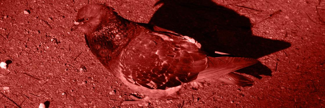A las palomas se las llega a considerar